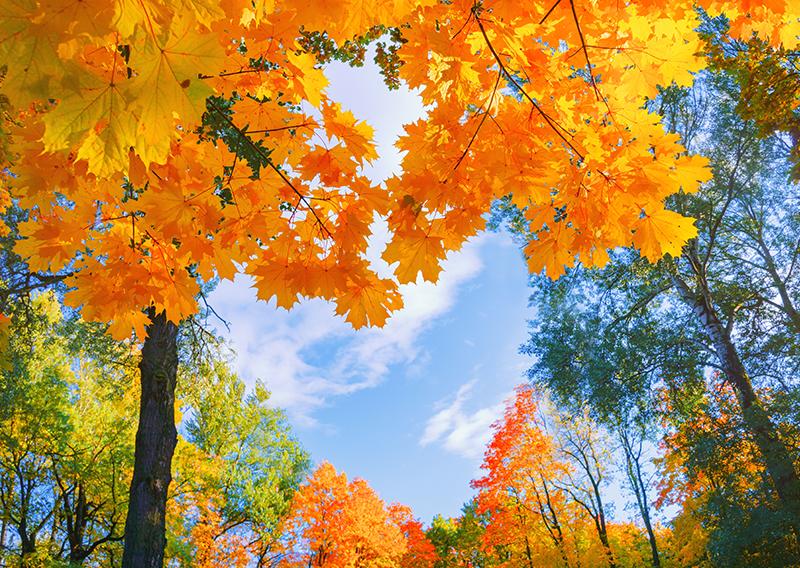 Augusta's Fall Foliage